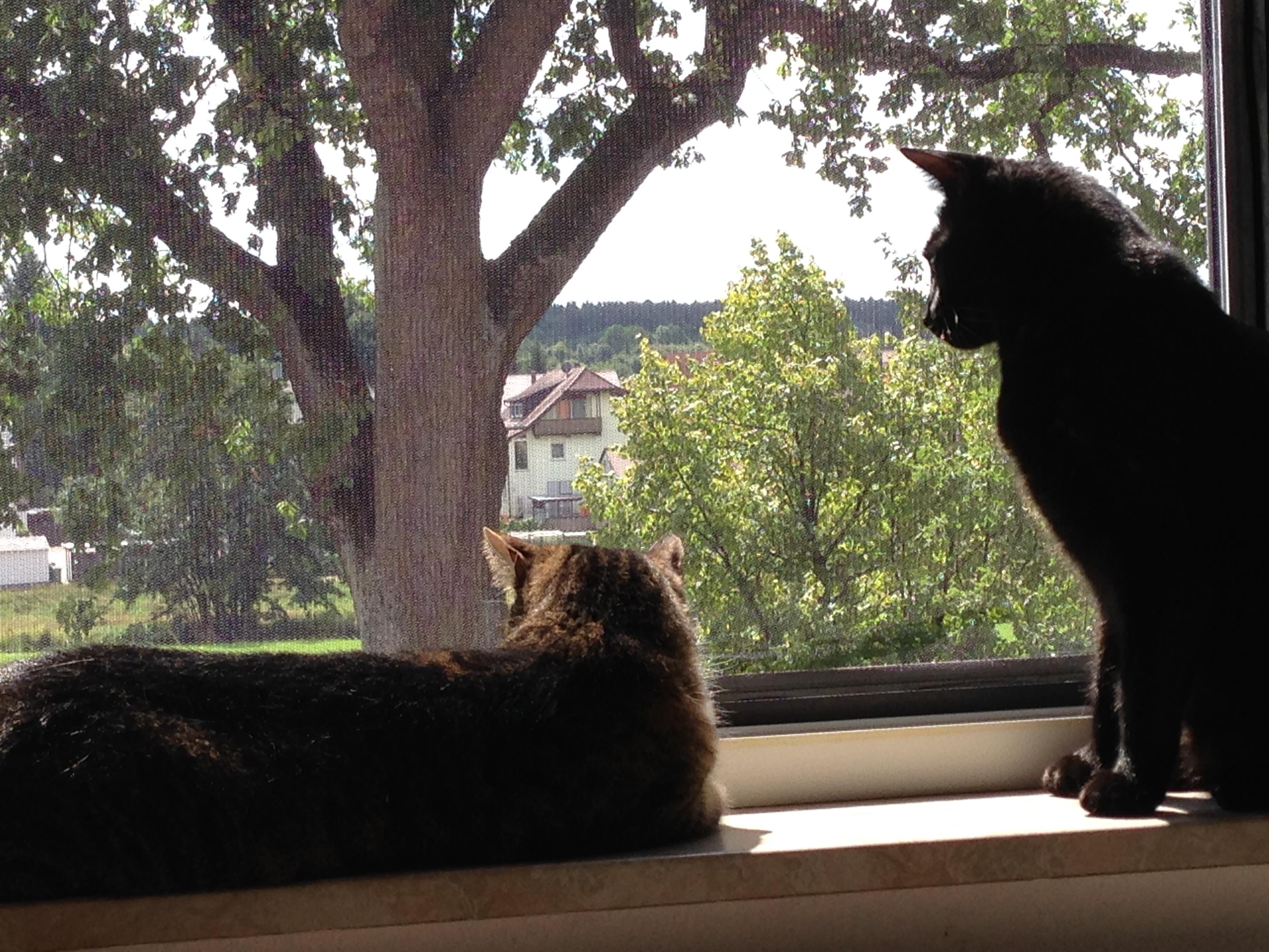 my beloved cats…