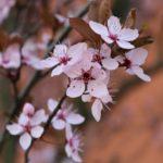 rosa Kirschbaum, good vibes, Springfeeling
