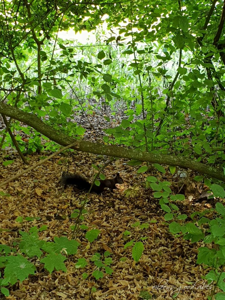 Eichhörnchen dunkelbraun, eileens good vibes, Kalorien Tracken