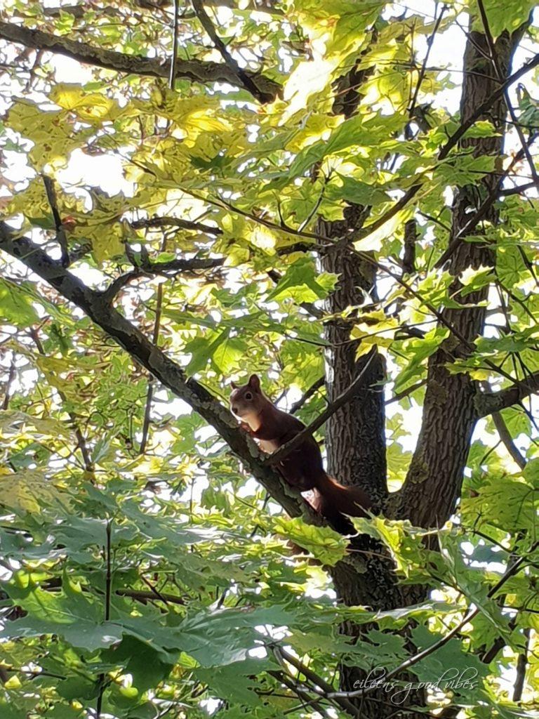 Eichhörnchen hellbraun, eileens good vibes, Kalorien Tracken
