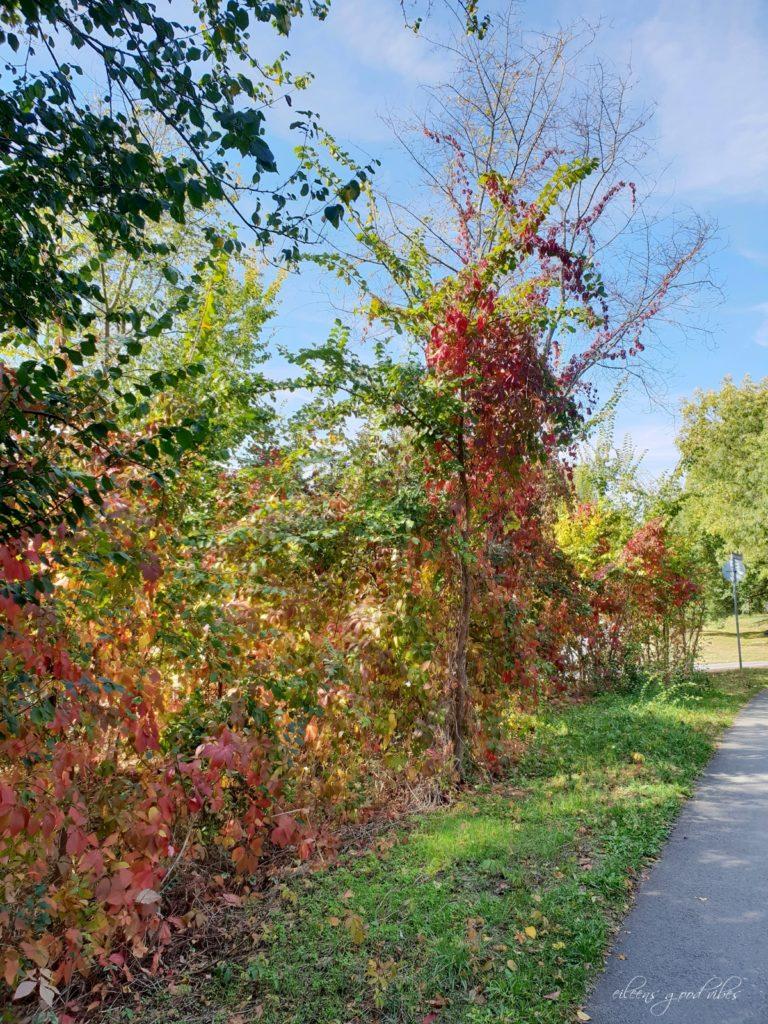 Herbstfarben, eileens good vibes, Kalorien Tracken