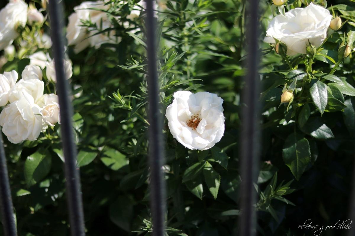 Blumen hinter Gittern, eileens good vibes, 1000 Fragen an dich selbst