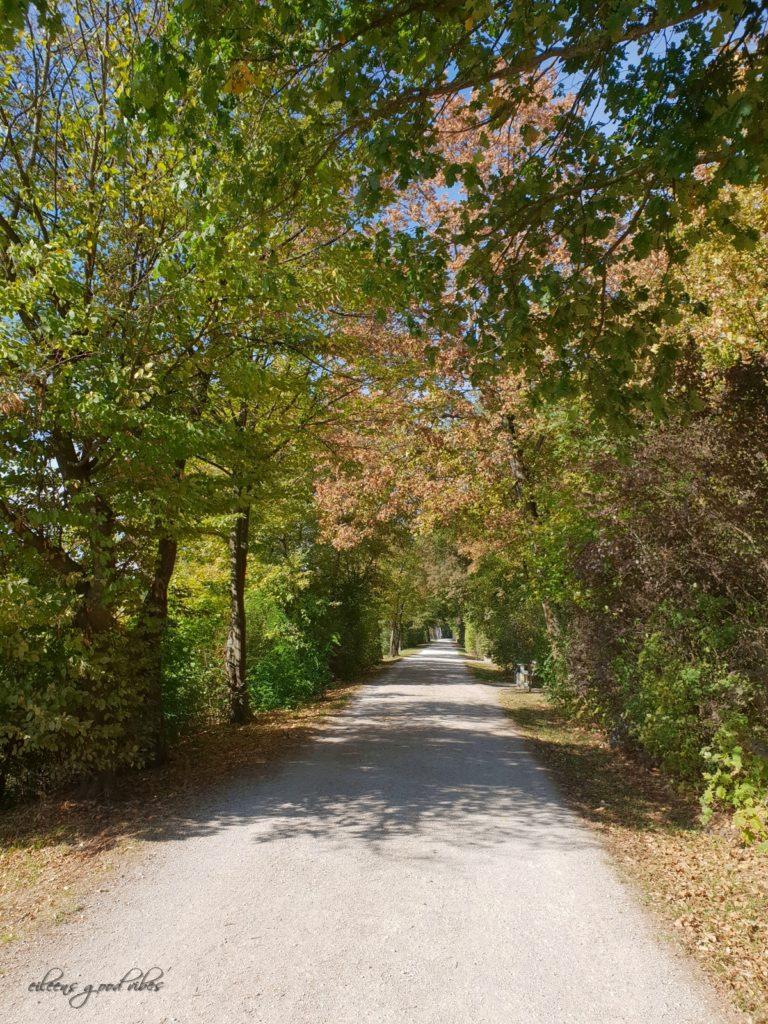 Spaziergang, eileens good vibes, Kalorien Tracken